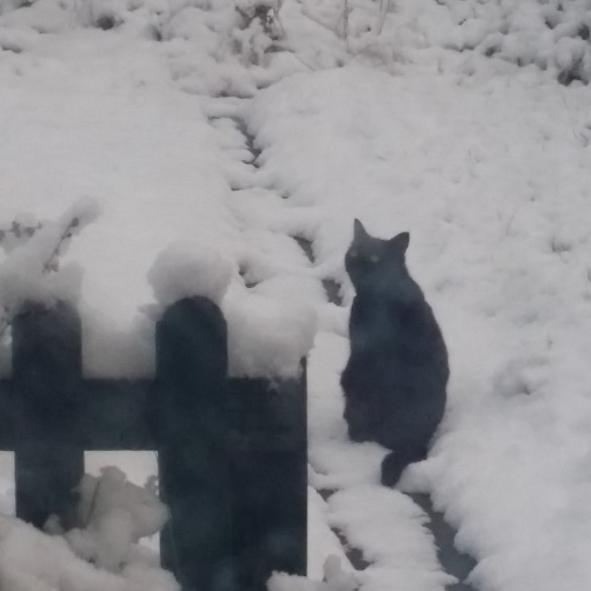 Shelly the Cat sees snow for the first time (Photo: Phil Mills)