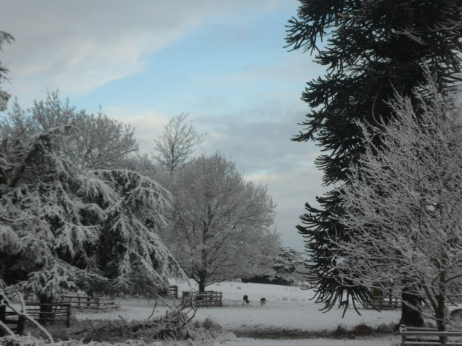 Bradgate Park (Photo: Rob Haylock)