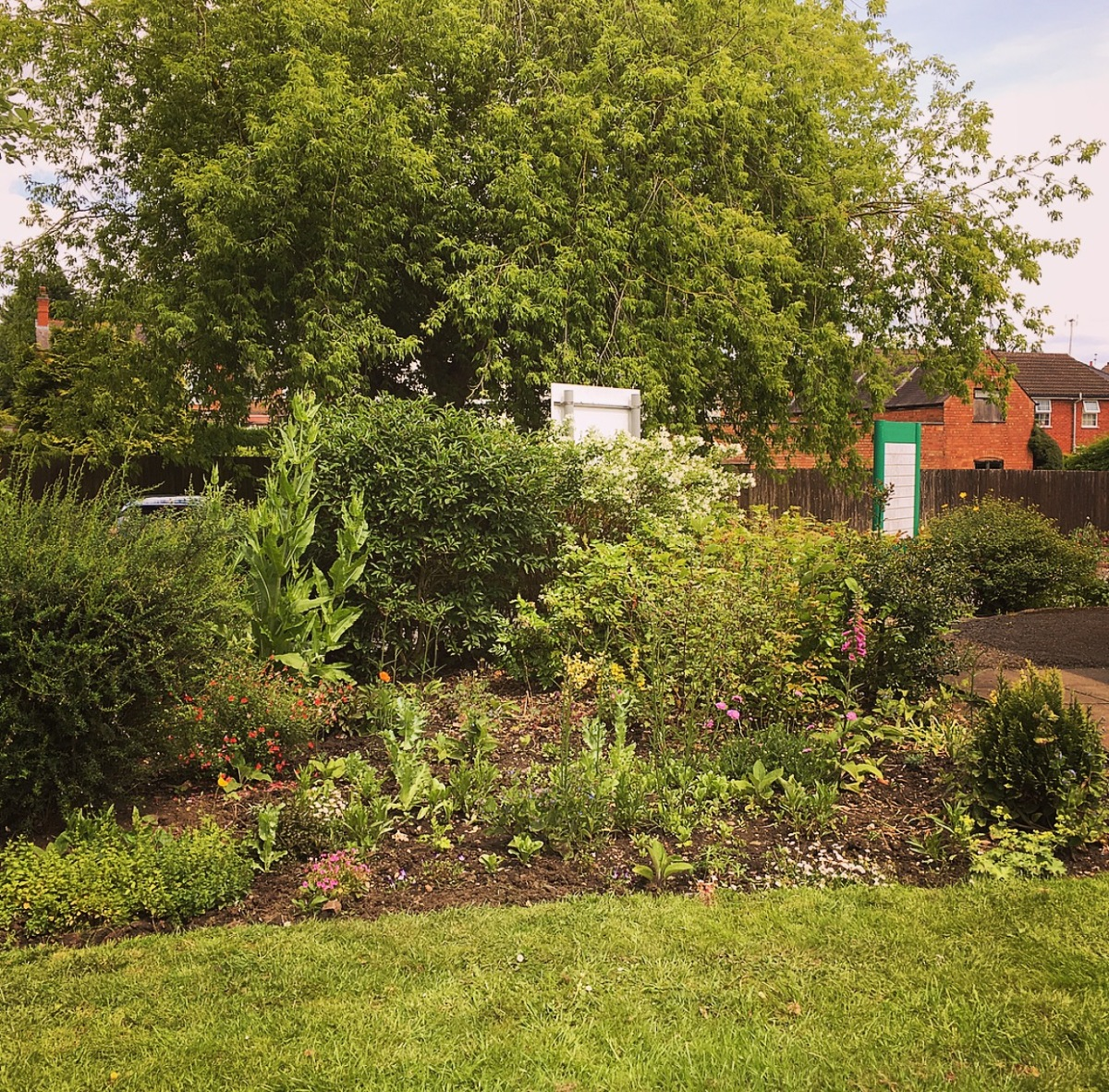 Anstey Library Community Garden: Almost One Year Later